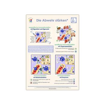 Poster Die Abwehr stärken aus dem Gesundheitsshop im LEBEN