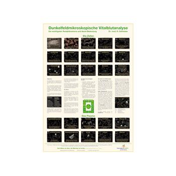 Poster Dunkelfeldmikroskopische Vitalblutanalyse aus dem Gesundheitsshop im LEBEN