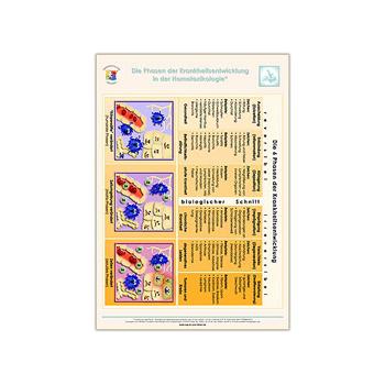 Poster Die Phasen der Krankheitsentwicklung in der Homotoxikologie aus dem Gesundheitsshop im LEBEN